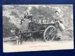 """Bruxelles--""""Laitières Flamandes Et Leur Attelage De Chien En Tournée""""(2220)--1903 - Artisanat"""