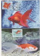 Taiwan R.O.CHINA -Maximum Card.- Aquatic Life Postage Stamps – Goldfish (4 Pcs.) - 1945-... Republic Of China