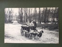 Saint-Mandé- Bois De Vincennes- La Voiture Aux Chèvres - Saint Mande