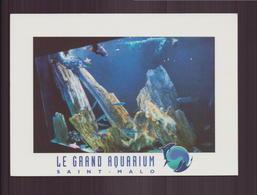 SAINT MALO LE GRAND AQUARIUM 35 - Saint Malo