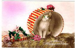 Chat Dans Boite - Cat -kleine Katze-  Poes In Doos - Chats
