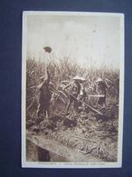 CARTE POSTALE Photo Ancienne 1950 : THUDAUMOT - LAITHIEU / PLANTATION DE CANNE A SUCRE / INDOCHINE - Vietnam