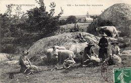 L'AVEYRON PITTORESQUE (12 AVEYRON)LA TONTE DES MOUTONS - France