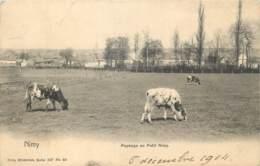 Belgique - Mons - Nimy - Paysage Au Petit Nimy - Nels Série 107 N° 60 - Mons