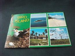UCCELLO BIRD VOGEL OISEAU BIRD ISLAND SEYCHELLES RIFILATA LATO - Birds