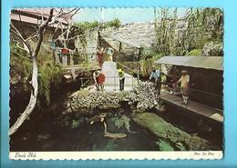 BERMUDA--BERMUDES--devils Hole Smiths Parish--voir 2 Scans - Bermudes