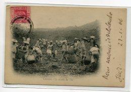 SRI LANKA CEYLON COLOMBO La Récolte Du Thé  Payasans Paniers Osier Transport  1906 Timbrée   D07 2020 - Sri Lanka (Ceylon)