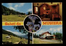 C3011 SALUTI DA MUSIERA - TELVE VALSUGANA - ALIMENTARI RISTORANTE BAR VG 1977 - Andere Steden