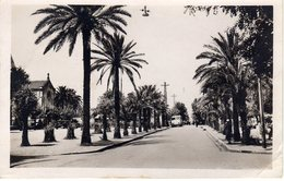 ALGERIE TAHER Allée Des Palmiers - Algeria