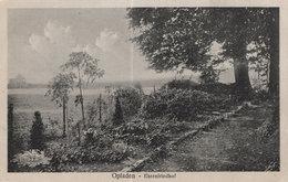 Opladen Ehrenfriedhof Forest Path Antique German Postcard - Allemagne