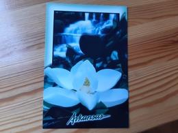Postcard, USA - Arkansas, Flower, Mint - Etats-Unis