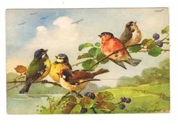 Klein  Oiseaux Sur Une Branche     CPA Dos Divisé    Pas Ecrite - Klein, Catharina
