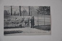 Jardin D'acclimatation LES MOUFLONS - Parks, Gardens