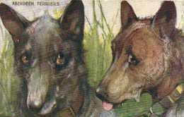 """Illustrateur """"TYPES OF CANINE BEAUTY """"ABERDEEN TERRIERS  RV TUCK'S - Chiens"""