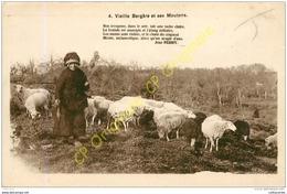 Vieille Bergère Et Ses Moutons . - Cartoline