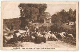 CORSE CPA  GHISONACCIA - Col De Saint-Antoine - Troupeau De Brebis - Frankreich