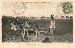 MAROC  CASABLANCA  Laboureur Marocain - Casablanca