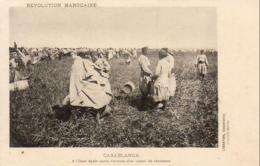 MAROC  CASABLANCA  A L'Oued Ayata Après L'arrivée D'un Convoi De Chameaux - Casablanca
