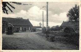 Belgique - Kinrooi - Ophoven - Leu - Kinrooi