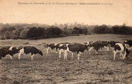 Fournils Près MUSSIDAN - élevages De Fournils - Vaches Hollandaises Au Paturage . - Altri Comuni
