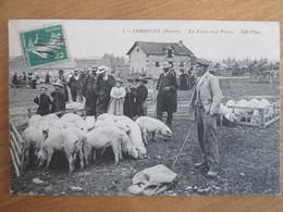 Corbigny . La Foire Aux Porcs - Corbigny