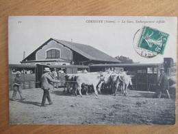 Corbigny  La Gare . Embarquement Difficile . Vaches - Corbigny
