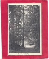 SOUS-BOIS PRES BALLAIGUES .AFFR AU VERSO LE 23 VIII 1910 . 2 SCANES - VD Vaud