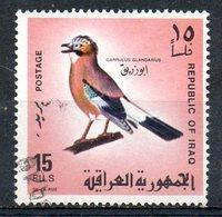 IRAK. N°489 Oblitéré De 1968. Geai Des Chênes. - Songbirds & Tree Dwellers