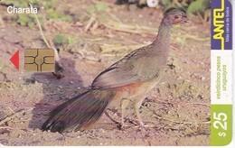 Nº 115 (CHIP ROJO) TARJETA DE UN PAJARO DE URUGUAY CHARATA (BIRD) - Uruguay