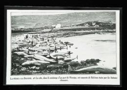 NORVEGE (Norge)  Chasse à La Baleine   (Whaling)  - Coupure De Presse  (encadré Photo) 1927 - Plongée