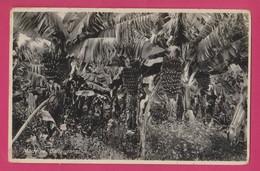 Madeira- Bananeiras, Bananas Plants, Selo 1942, Portugal - Madeira