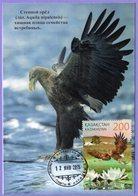 Kazakhstan 2015 (2014). Maxicard. Naurzum Nature Reserve. Fauna.  Birds. White Tailed Eagle. Maximum Cards. - Aigles & Rapaces Diurnes