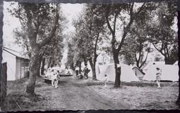 BELGIQUE BELGIE Cpa Postcard - BREDENE Photo Card - Camping No.12 - Bredene