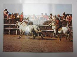 Carte Postale Rodéo Gardian En Camargue - Horses