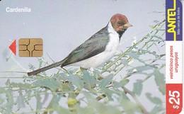 Nº 132 (CHIP G5 ROJO) TARJETA DE URUGUAY DE ANTEL DE UNA CARDENILLA (PAJARO-BIRD) - Uruguay