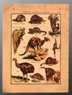 Protège Cahier.... ANIMAUX D'AUSTRALIE ET OCEANIE (PPP11856) - Animales