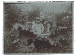Photo Ancienne - Jeunes Filles Dans Un Plant De Rhubarbe - 12 X 9 Cm - Personnes Anonymes