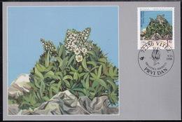 Bosnia (Croatian), 1998, Flora, Flowers, Maximum Card - Plants