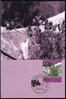Bosnia (Croatian), 2003, Flora, Flowers, Maximum Card - Plants