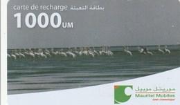 Mauritania - Mauritel - Flamingos - Mauritania