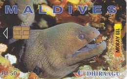 TARJETA DE MALDIVES DE UNA MORENA  (MORAY EEL) PEZ-FISH - Maldiven