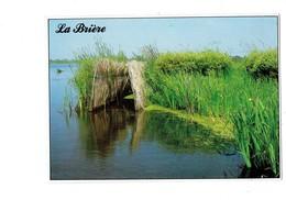 Cpm - Parc Naturel Régional De Brière - Affût De Chasse Dans Le Marais - Cim C34499900007 - Fleur Iris D'eau Jaune - Francia
