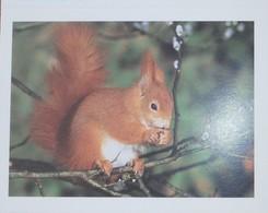 Petit Calendrier De Poche 2004 écureuil - Calendars