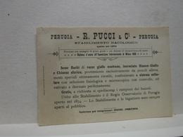 PERUGIA  --  BACHI DA SETA  -- BACOLOGIA  --  R. PUCCI  & CI.--STABILIMENTO BACOLOGICO - Perugia