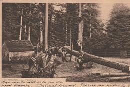 HOLZFALLER In Den Vogesen - BUCHERONS Dans Les Vosges - Artisanat