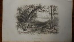 Gravure XIXe. Ile Des Kangourous En Australie. - Estampes & Gravures