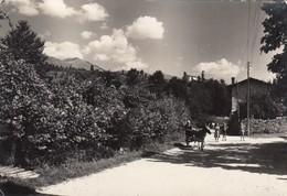 SAN GIOVANNI DI SOPRA-BUDOIA-UDINE-VIA BUDOIA-CARTOLINA VERA FOTOGRAFIA-VIAGGIATA IL 12-9-1955 - Udine
