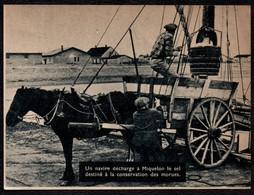1956  --  MIQUELON DECHARGEMENT DU SEL DESTINE AUX MORUES  3T026 - Vieux Papiers