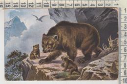 ANIMALS BEAR WITH CHILDREN  ORSO VG - Elephants