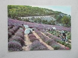 LES VRAIS COUPEURS DE LAVANDE  ANIMEES  VOYAGEE 1985 - Provence-Alpes-Côte D'Azur
